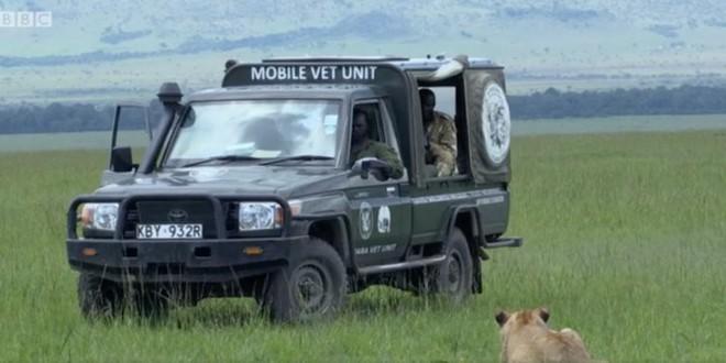 Cứu sư tử con bị đầu độc, đoàn làm phim BBC vô tình vi phạm một trong những quy tắc quan trọng với thiên nhiên hoang dã - Ảnh 1.