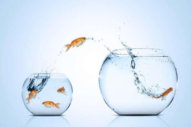 Những sự thật khó ai tin nổi về loài cá vàng: Được cưng hết mực ở Nhà Trắng, biết nghe nhạc và làm trò như cún - Ảnh 6.