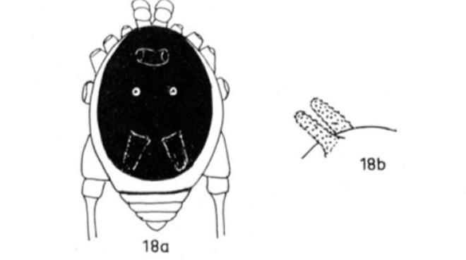 Kỳ lạ loài nhện nhìn y hệt đầu con chó khiến internet vừa sợ vừa buồn cười - Ảnh 4.