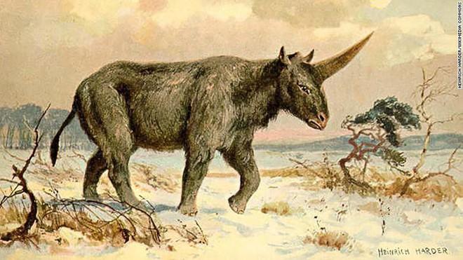 Kỳ lân Siberia - loài tê giác nặng tới 3,5 tấn tuyệt chủng do biến đổi khí hậu, không phải do con người - Ảnh 2.