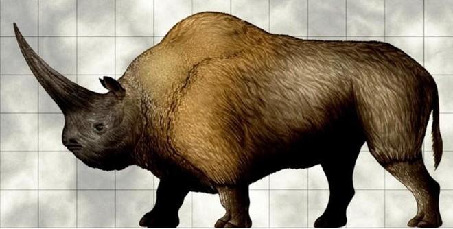 Kỳ lân Siberia - loài tê giác nặng tới 3,5 tấn tuyệt chủng do biến đổi khí hậu, không phải do con người - Ảnh 3.