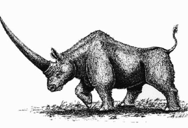 Kỳ lân Siberia - loài tê giác nặng tới 3,5 tấn tuyệt chủng do biến đổi khí hậu, không phải do con người - Ảnh 1.