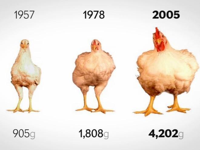 Sự thật: chúng ta đang sống trong kỷ nguyên của những con gà - Ảnh 3.