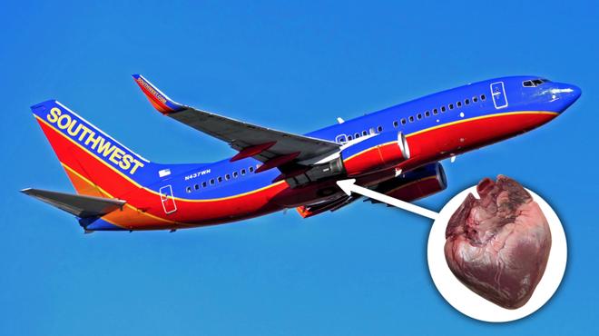 Mỹ: Ai đó đã để quên 1 quả tim người trên chuyến bay của Southwest Airlines - Ảnh 1.