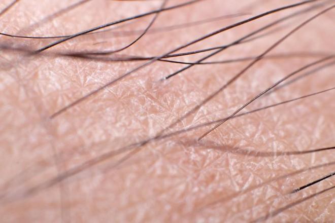 Tại sao nách có lông mà tay thì rất ít? Cuối cùng chúng ta cũng có đáp án rồi - Ảnh 2.