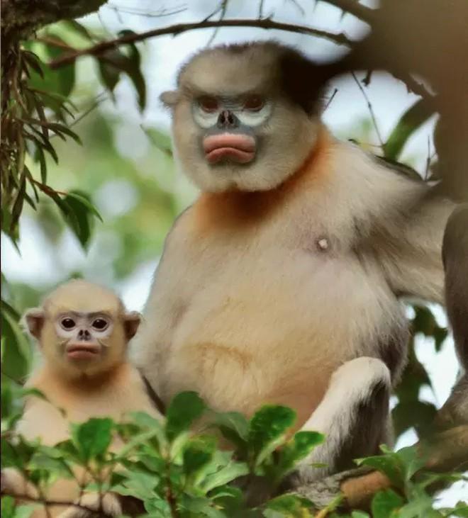 9 loài vật hiếm cực độ có khả năng tuyệt chủng trước cả khi bạn biết đến chúng - Ảnh 3.