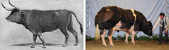 9 loài vật cực quen thuộc này thời xưa lại có ngoại hình dị đến mức không thể tin nổi - Ảnh 2.