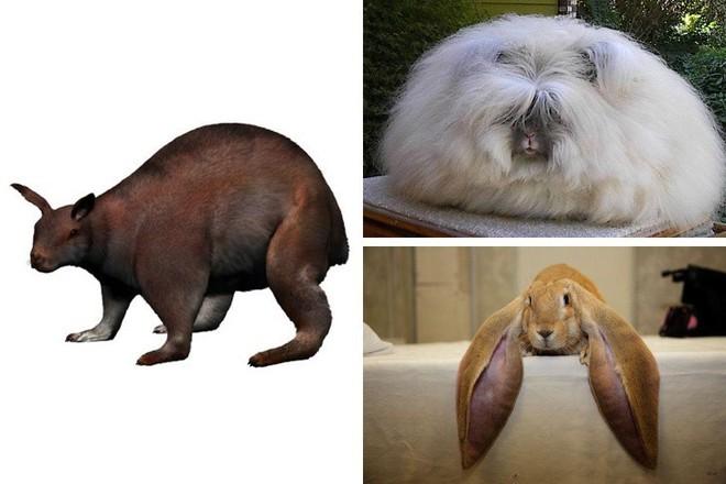 9 loài vật cực quen thuộc này thời xưa lại có ngoại hình dị đến mức không thể tin nổi - Ảnh 6.