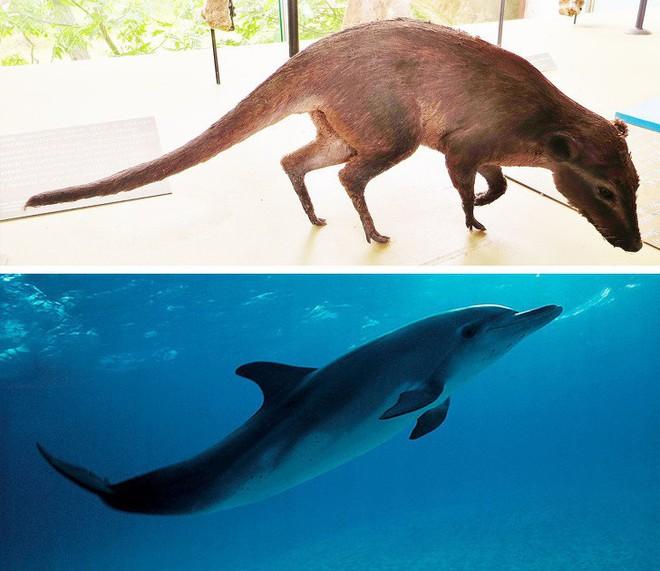 9 loài vật cực quen thuộc này thời xưa lại có ngoại hình dị đến mức không thể tin nổi - Ảnh 7.