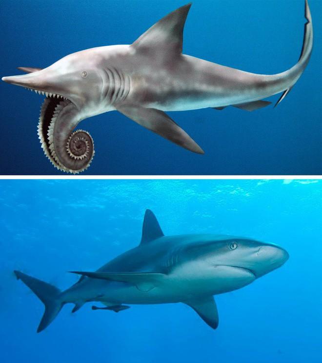 9 loài vật cực quen thuộc này thời xưa lại có ngoại hình dị đến mức không thể tin nổi - Ảnh 8.