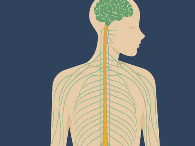 Các nhà khoa học tạo ra một con chip dán vào dạ dày, giúp bạn giảm hoặc tăng cân tùy ý - Ảnh 1.
