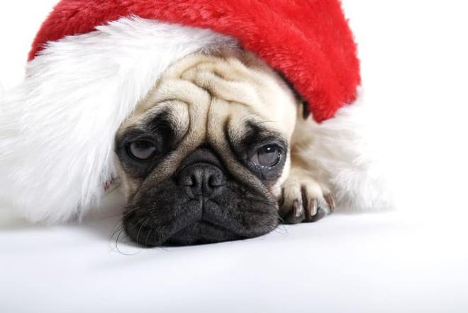 Holiday blue: Trầm cảm ngày lễ là một hiện tượng có thật và khoa học nói gì? - Ảnh 1.