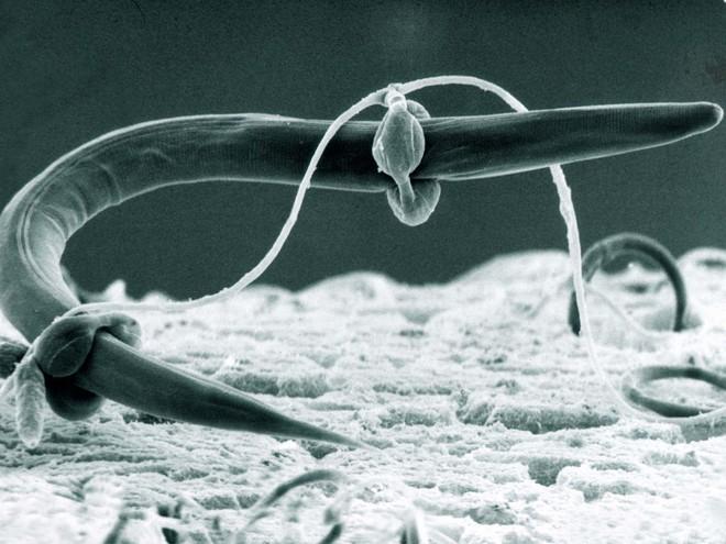 Loài nấm nhìn thì hiền khô nhưng lại là loài ăn thịt và săn mồi theo cách tàn bạo bậc nhất - Ảnh 2.