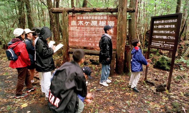 Khu rừng Aokigahara nổi tiếng với hàng loạt vụ tự tử tại Nhật Bản.