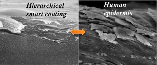 Cấu trúc vật liệu mô phỏng tính chất dày sừng của da người