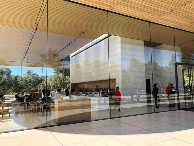 Sử dụng kính quá trong, Apple Park khiến nhân viên thường xuyên đụng đầu vào tường - Ảnh 1.