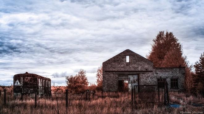 Một cánh đồng bị bỏ hoang tại vùng cấm Chernobyl.