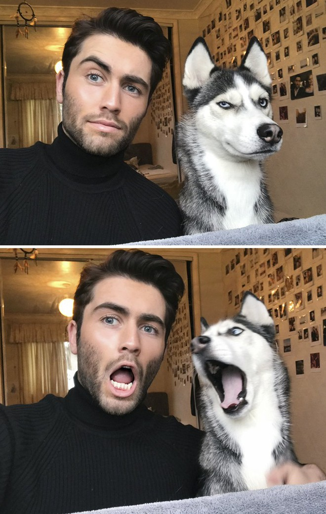 Trào lưu chủ nào chó nấy bất ngờ gây sốt trên Twitter vì quá dễ thương - Ảnh 1.