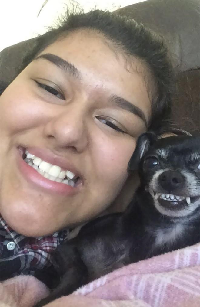 Trào lưu chủ nào chó nấy bất ngờ gây sốt trên Twitter vì quá dễ thương - Ảnh 10.