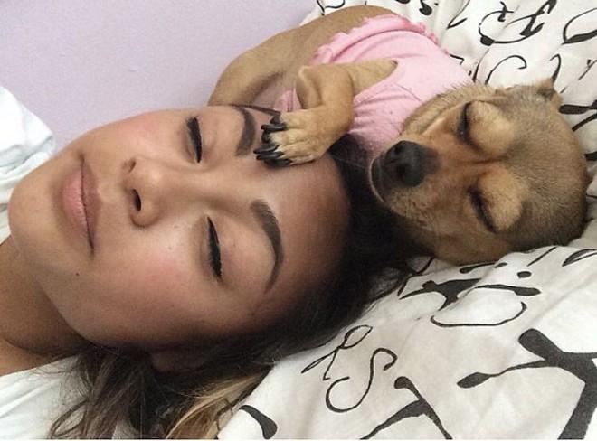 Trào lưu chủ nào chó nấy bất ngờ gây sốt trên Twitter vì quá dễ thương - Ảnh 11.