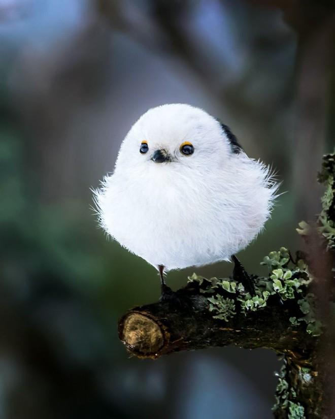 [Vui] Những chú chim trong Angry Birds là có thật, không tin mời bạn xem những bức ảnh này - Ảnh 1.