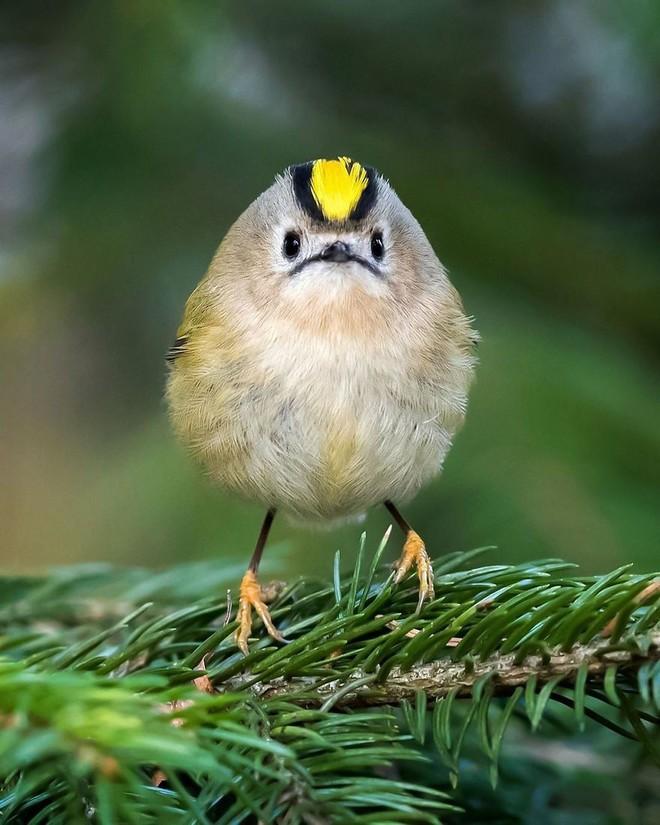 [Vui] Những chú chim trong Angry Birds là có thật, không tin mời bạn xem những bức ảnh này - Ảnh 2.