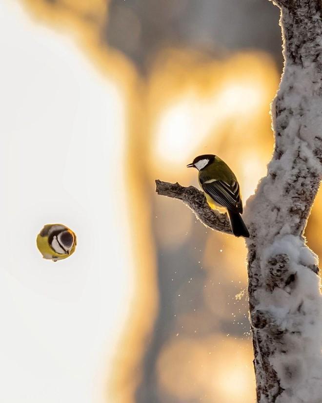 [Vui] Những chú chim trong Angry Birds là có thật, không tin mời bạn xem những bức ảnh này - Ảnh 4.