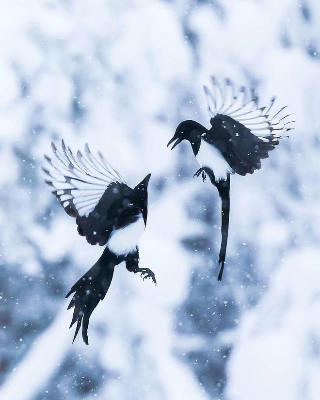 [Vui] Những chú chim trong Angry Birds là có thật, không tin mời bạn xem những bức ảnh này - Ảnh 5.