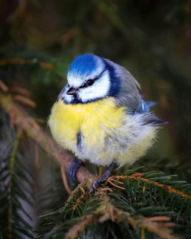 [Vui] Những chú chim trong Angry Birds là có thật, không tin mời bạn xem những bức ảnh này - Ảnh 6.
