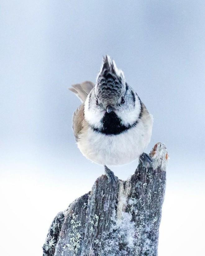[Vui] Những chú chim trong Angry Birds là có thật, không tin mời bạn xem những bức ảnh này - Ảnh 7.