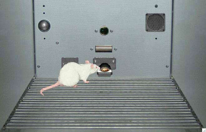 Thử nghiệm thuốc trên chuột ảo sẽ cứu sống được 60.000 động vật thí nghiệm mỗi năm
