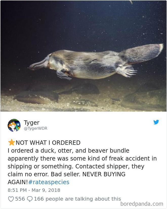 [Vui] Vườn thú Mỹ tạo nên trào lưu mới nhờ review động vật theo kiểu Amazon.com - Ảnh 2.