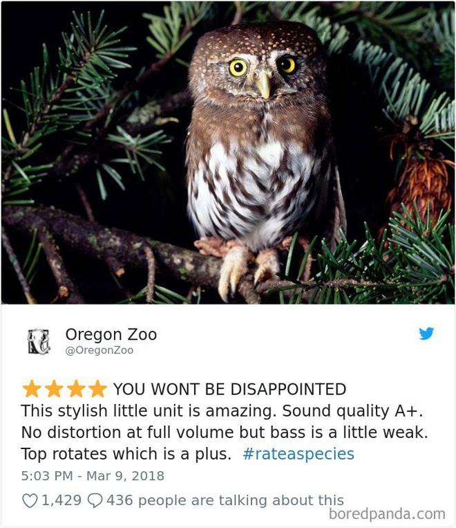 [Vui] Vườn thú Mỹ tạo nên trào lưu mới nhờ review động vật theo kiểu Amazon.com - Ảnh 4.