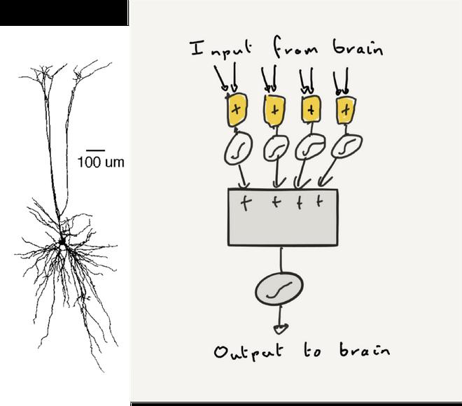 Bạn có biết vỏ não của mình chứa tới 17 tỷ cái máy tính không? - Ảnh 5.