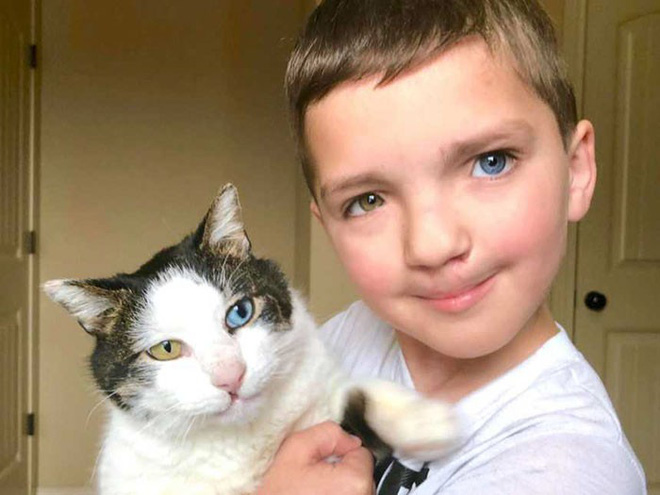 Cùng màu mắt, cùng bị tật ở miệng, số phận đã an bài cho cậu bé đáng thương và chú mèo hoang trở thành tri kỷ - Ảnh 1.