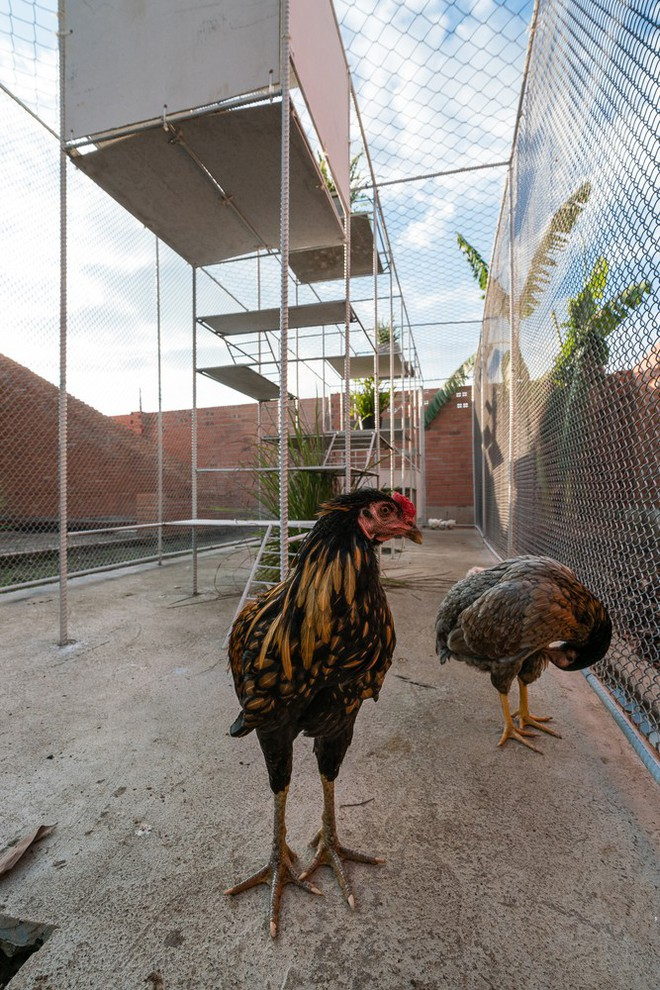 Chuồng gà ở Long An được lên tạp chí kiến trúc Mỹ - Ảnh 16.