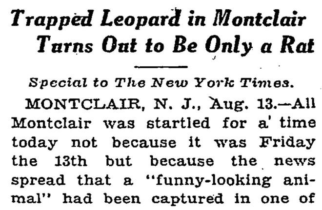 Cái kết buồn của chú gấu mèo bị nhận nhầm là hổ ở New York - Ảnh 6.