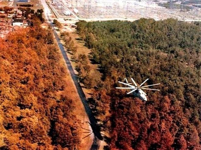 Chernobyl là thảm họa của con người, nhưng lại là tin vui với động vật hoang dã trong khu vực này - Ảnh 3.