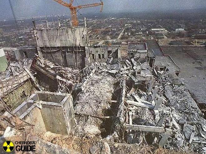 Chernobyl là thảm họa của con người, nhưng lại là tin vui với động vật hoang dã trong khu vực này - Ảnh 1.
