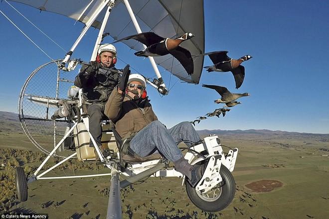 Christian Moullec (ngồi phía sau) - một phi công láy máy bay mini dù đã 58 tuổi nhưng vẫn giữ vững đam mê yêu thương động vật, bay cùng loài ngỗng di cư về nước Pháp