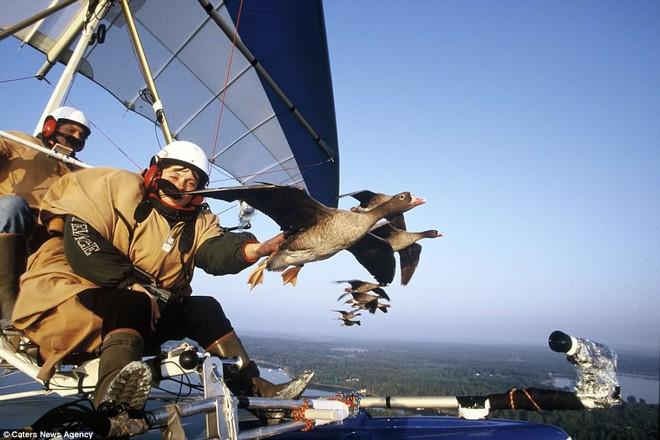 Vợ của Moullec cũng còn chia sẻ niềm đam mê với ông, trong ảnh, bà đang vuốt ve chú ngỗng khi bay qua Thụy Điển vào năm 1999