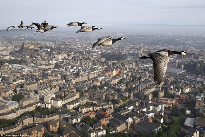 Việc làm của ông giúp những con chim có thể di chuyển an toàn...