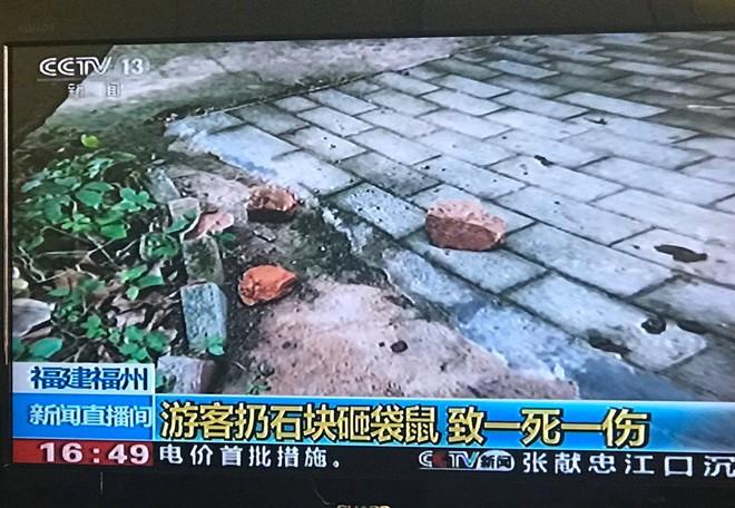 Trung Quốc: Một con kangaroo trong vườn thú đã chết sau khi bị du khách ném đá bắt nhảy - Ảnh 1.