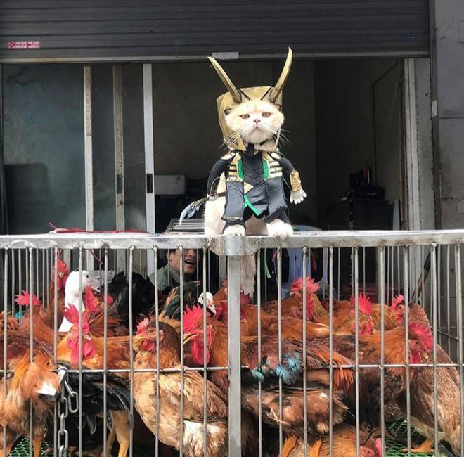 Chú mèo tên Chó lại hóa thân thành siêu anh hùng Avengers, được bạn bè Thái Lan cưng nựng, xuýt xoa hết lời - Ảnh 4.