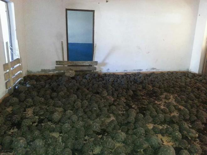 Phát hiện ra hơn 10.000 cá thể rùa cạn bị nhốt trong nhà của thợ săn, có lẽ đã không phát hiện được ra nếu mùi hôi thối không lan rộng ra toàn bộ khu vực - Ảnh 3.