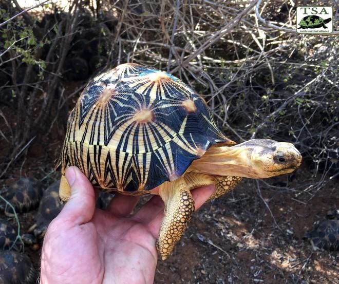 Phát hiện ra hơn 10.000 cá thể rùa cạn bị nhốt trong nhà của thợ săn, có lẽ đã không phát hiện được ra nếu mùi hôi thối không lan rộng ra toàn bộ khu vực - Ảnh 1.