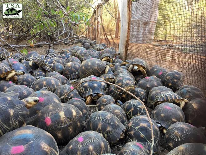 Phát hiện ra hơn 10.000 cá thể rùa cạn bị nhốt trong nhà của thợ săn, có lẽ đã không phát hiện được ra nếu mùi hôi thối không lan rộng ra toàn bộ khu vực - Ảnh 5.