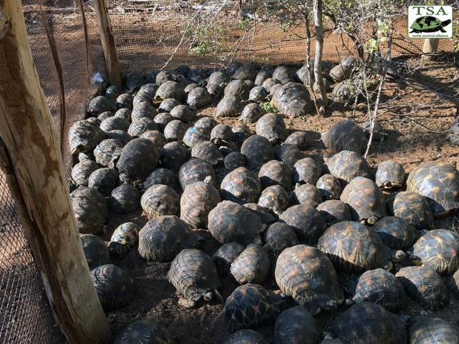 Phát hiện ra hơn 10.000 cá thể rùa cạn bị nhốt trong nhà của thợ săn, có lẽ đã không phát hiện được ra nếu mùi hôi thối không lan rộng ra toàn bộ khu vực - Ảnh 6.