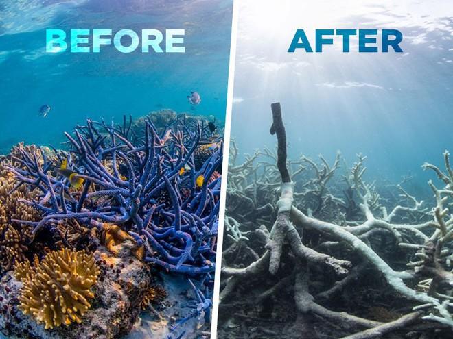 Viễn cảnh kinh hoàng nào đón đợi ta khi toàn bộ rạn san hô trên Trái đất này biến mất? - Ảnh 1.