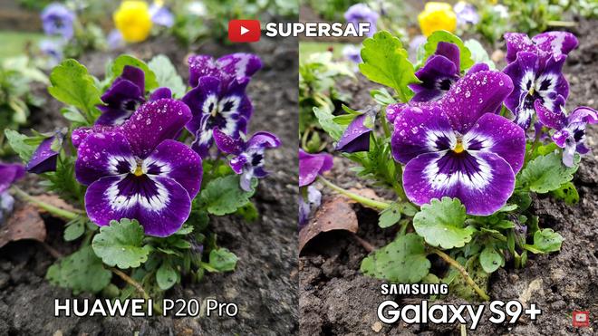 Camera của S9+ đã làm tốt hơn, giữ được nhiều chi tiết của hoa, khả năng tái tạo màu sắc cũng chân thật hơn là P20 Pro